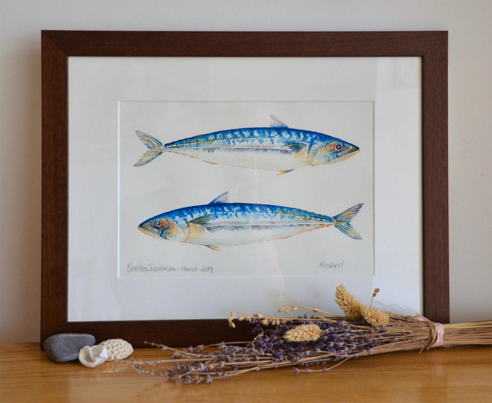 Mackerels  Watercolour  Framed size 18 x 14 inches  £150