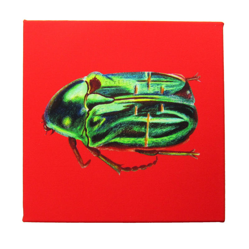 Rose Chaffer Canvas, digitally printed on cotton canvas