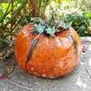 One big juicy pumpkin.