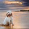 Bramble on Bembridge beach