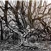 Frithsden Great Beech; Woodcut on paper