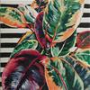 Rubber Fig Plant on Stripes (20x30cm) - contemporary botanical inspired funky painting