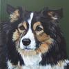Border collie, acrylic painting
