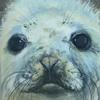Seal pup. Section. Acrylic on canvas. 30x75 cm Prints available.