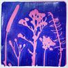 'Purple Botanicals' Botanical print made using local foliage.