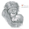 Gorilla and Baby (Graphite Pencil) - The Natural World, Sketchbook Heaven