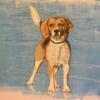 Beagle portrait commission