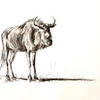 Blue Wildebeest Charcoal Drawing