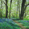 I have really enjoyed the bluebells this year (2021) and painted this view from Batchwood when the trees created such imposing shadows.
