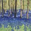 Early Lockdown bluebells in Whippendell Woods. Acrylic gouache on paper; 31 x 42cm.