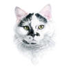 Cat - Pet Portrait