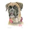 Boxer Dog - Pet Portrait