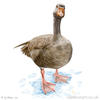 painting of a greylag goose