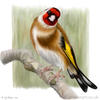 painting of a goldfinch perched on a branch looking a liittle bit cheeky