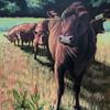'Moovie poster' Red Poll cattle posing. Acrylic paint on large canvas. 90x120 cm. Prints available.