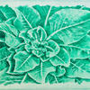 Ornamental Cabbage - Photopolymer Etching