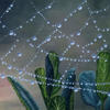 Just stepping out of my front door I saw this beautiful web, so I painted it!