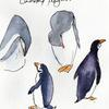 Chinstrap penguins sketched in the Antarctic in March 2020