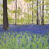 Forest of Bluebells // Acrylic on Stretched Canvas (50 x 50 cm)