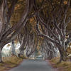 Dark Hedges, County Antrim - avenue of trees used in Game of Thrones - manipulated in Photoshop