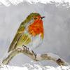 Christmas Robin. Watercolour. SOLD
