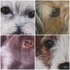 Jo Chesney - It's all in the detail! Pet portraits in acrylics