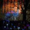 Digital collâge, night time scene in woodland.