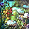 """Flight of The Butterfly"" A Fine Art Photograghy Print By Artist Loren"