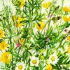 Wild flowers from Woodoaks farm 10ins sq