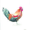 Freddie the cockerel by Avie Nash. Watercolour