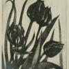 Black tulips. V/E Mezzotint. Framed 20cm x 23cm.  £30.00