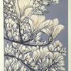 Magnolia blossom. V/E Lino print. Framed 43cm x 53cm. £95.00