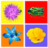 4 Canvases featuring bright flowers and beetles - featured in the 'Habitat' exhibition in Baldock. Also available as cushions, £50 each available from the artist