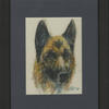 German shepherd dog. Water-soluble crayons on paper
