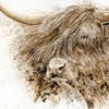 Highland Cattle - Walnut Ink