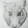 Hamster sketch using graded drawing pencils.