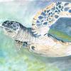 Hawksbill Turtle, gouche on watercolour paper