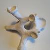 clay sculpture of a human thoracic vertebra