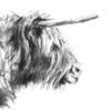 Highland Cow Art