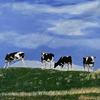 Even Cows Get the Blues, Acrylic on Canvas, 30 x 40 cm