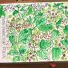 Brambles - nature sketchbook journalling