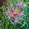 Allium, acrylic painting from my garden, 1m x 1m, unfinished