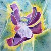 Spent Poppy  Watercolour.  Price: £75  Size 40x40cm  Framed