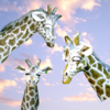 "Handmade Frostproof Ceramic Garden Feature giraffe ""Jessie"" Size: 54 x 37 x 33 cm"