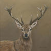 Red Deer Stag by Jo Chesney. Wildlife painting in acrylic on canvas