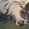 Jo Chesney - Lazy Cow Painting in acrylic.