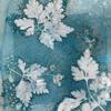 #cyanotype