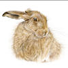 Hare -  Watercolour painting