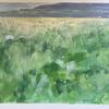 Meadow flowers looking over The Burren, County Clare. Acrylic gouache on paper; 35 x 46cm.