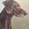 Maddie by Jo Chesney. German Shorthaired Pointer portrait in acrylic on canvas